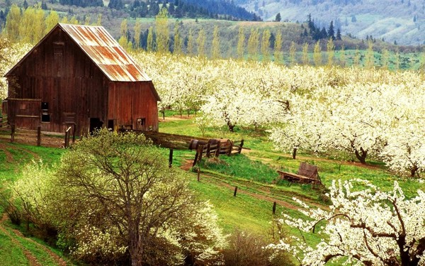 Free-Desktop-Backgrounds-for-Spring-Farm-1024x640 2